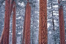 Tremendous Trees / The beauty of trees, love them!