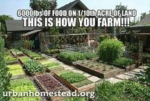 Sustainable Living / Homesteading / by Melissa Lindsay