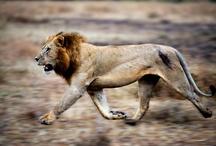 Animals in Motion