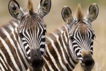 Safari / Safari in Southern Africa