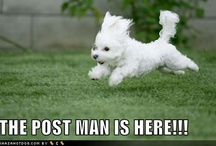 Bichon Poo-Like Our Daisy!!! / by Angie Tinsley