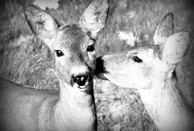 Animals around me / Everything is a good motive when you love photography