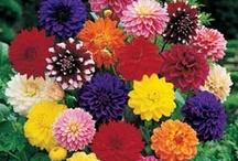 fav blooms