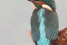 Kingfisher / Birds