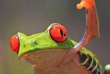 Животные. насекомые.птицы