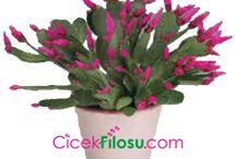Çiçek bakımı ve yetiştirilmesi