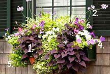 egynyári növények
