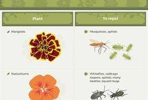 Creating veg garden