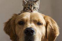 Animals love love!