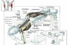 Anatomía del ejercicio