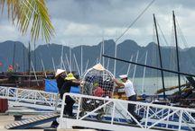 """Vietnam, Baie d'Halong / De réels paysages de carte postale, des moments """"inoubliaux"""" dans un cadre à couper le souffle. Vous n'avez pas encore visité le Vietnam ? ... foncez ! Et quoiqu'il en soit, la Baie d'Halong, on ne souhaite qu'une chose quand on connait : c'est y retourner !"""