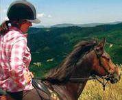 Bitless Riding
