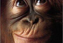 год обезьяны.