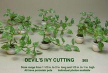 Mini doll plant