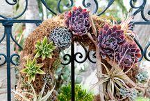 Succulent Living