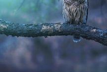 Beautiful animal's