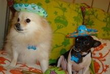 pups! / by Lisa Baxter Janovec