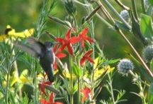Or Go Big! / Get your Prairie On and turn your land into nature's retreat