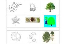Idées sur l'arbre