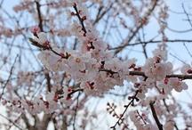 kyoto photo / 京都の風景など