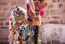 Colour! / Brights, pastels, any colour you like as long as it's multicoloured! Let the world be bright and shine on...