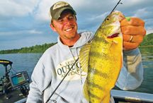 Nice Perch Pictures