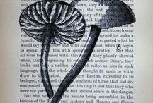 Mushrooms! / by Sara Thompson