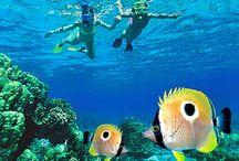 Sacred Kauai / Summer 2016 Travel Plans