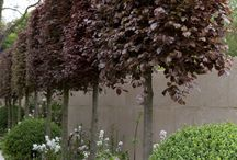 Trees for small spaces