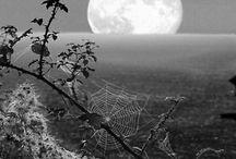 Black & white / by Jayne Stokes