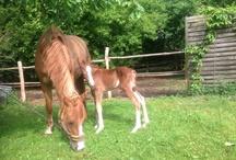 Mein Ponyfohlen