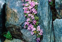 Rock wall plants