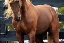 Horses / Referenses