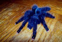 pókok