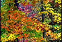 листья цвета