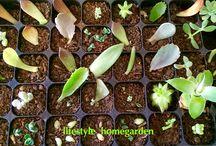 Cultivo de suculentas / Plantas, cultivo