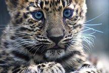 {beautiful creatures}