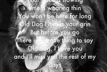 pet sayings