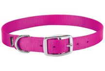 Goat collars, halters and leads