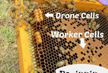 Beeswax and Honey Department