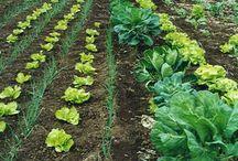 Agricultura / El trabajo de la tierra