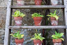 Herbs and veggies that will grow in Scotland! / Herbs and plants that will grow in our little garden in Scotland! xo