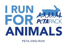 PETA Pack / The PETA Pack is a team of compassionate and motivated people just like you who want to protect animals. Just as PETA appreciates the best rescued mutts, the PETA Pack welcomes participants of all shapes and sizes. Some of us are new to running, and others are experienced marathoners. But we all have one thing in common: We want to make PETA a stronger voice for animals everywhere! / by Official PETA