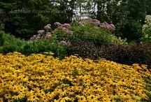 Lato Summer Arboretum Trojanów
