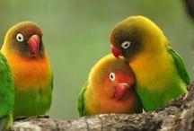 www.birdsoftanzania.blogspot.com / Birds of Tanzania and from all over the world