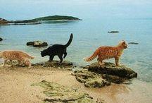 colonia felina su pallosu