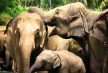 Elefántok / Elephants