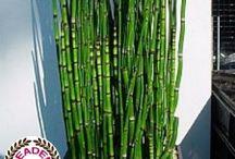 Plantes pour balcon