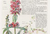 Grabados botánicos