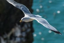 Martılar -Seagulls